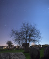 Orion above a tree among the menhirs